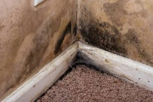 mold in the corner of a room